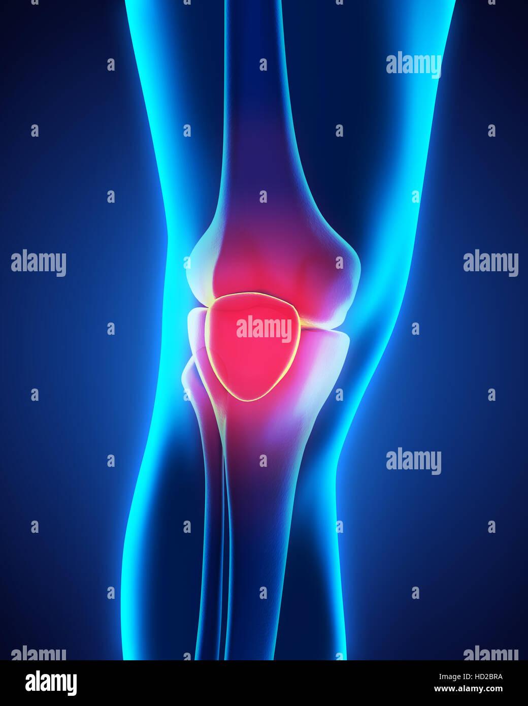 Anatomie der menschlichen Knie Stockfoto, Bild: 128516286 - Alamy