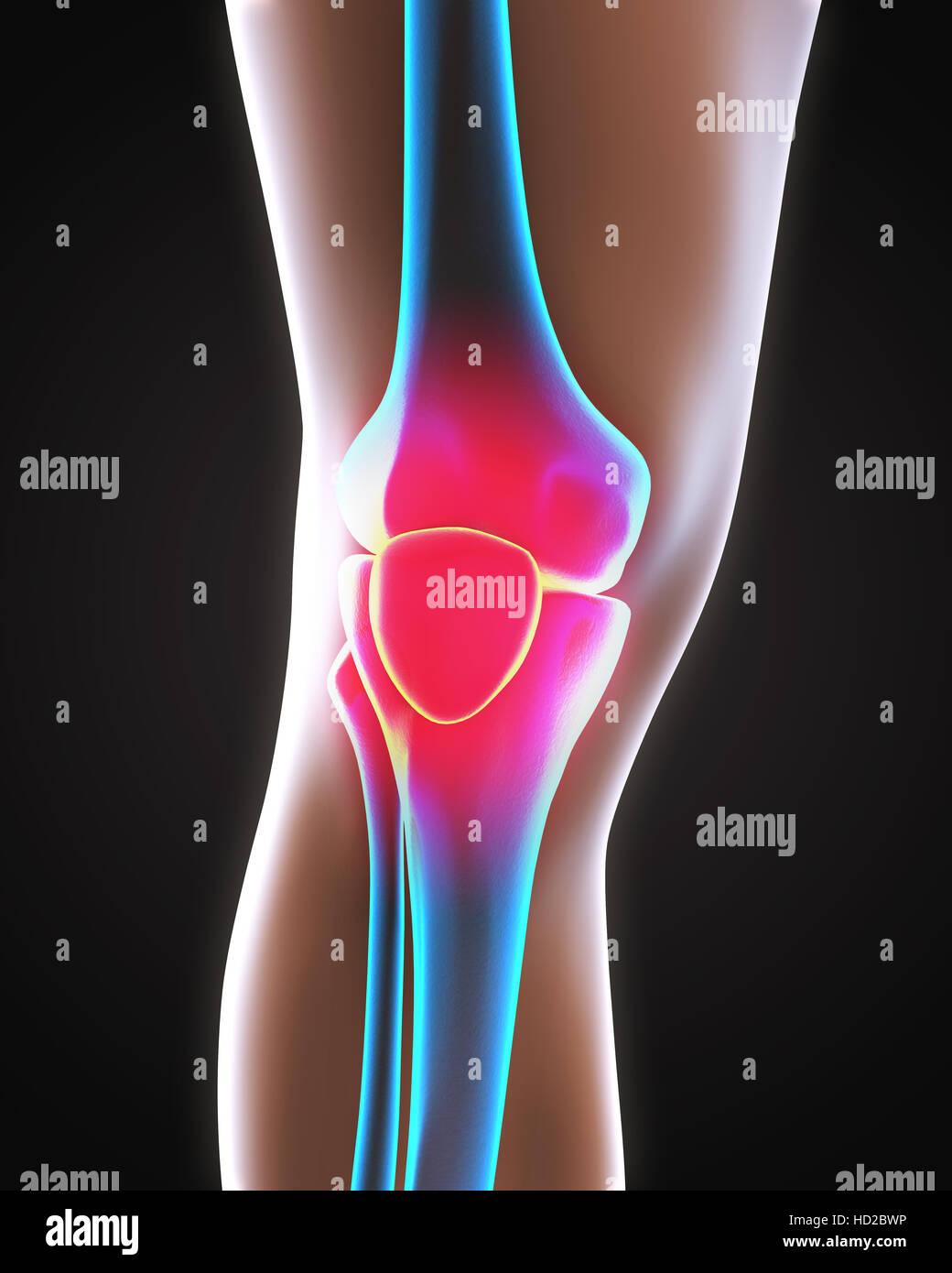Anatomie der menschlichen Knie Stockfoto, Bild: 128516354 - Alamy