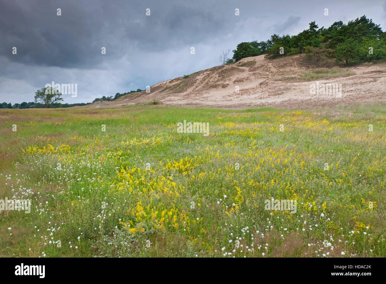 Binnendünen von Klein Schmölen in der Nähe der Elbe, Mecklenburg Elbe Valley Nature Park / Mecklenburgisches Stockbild