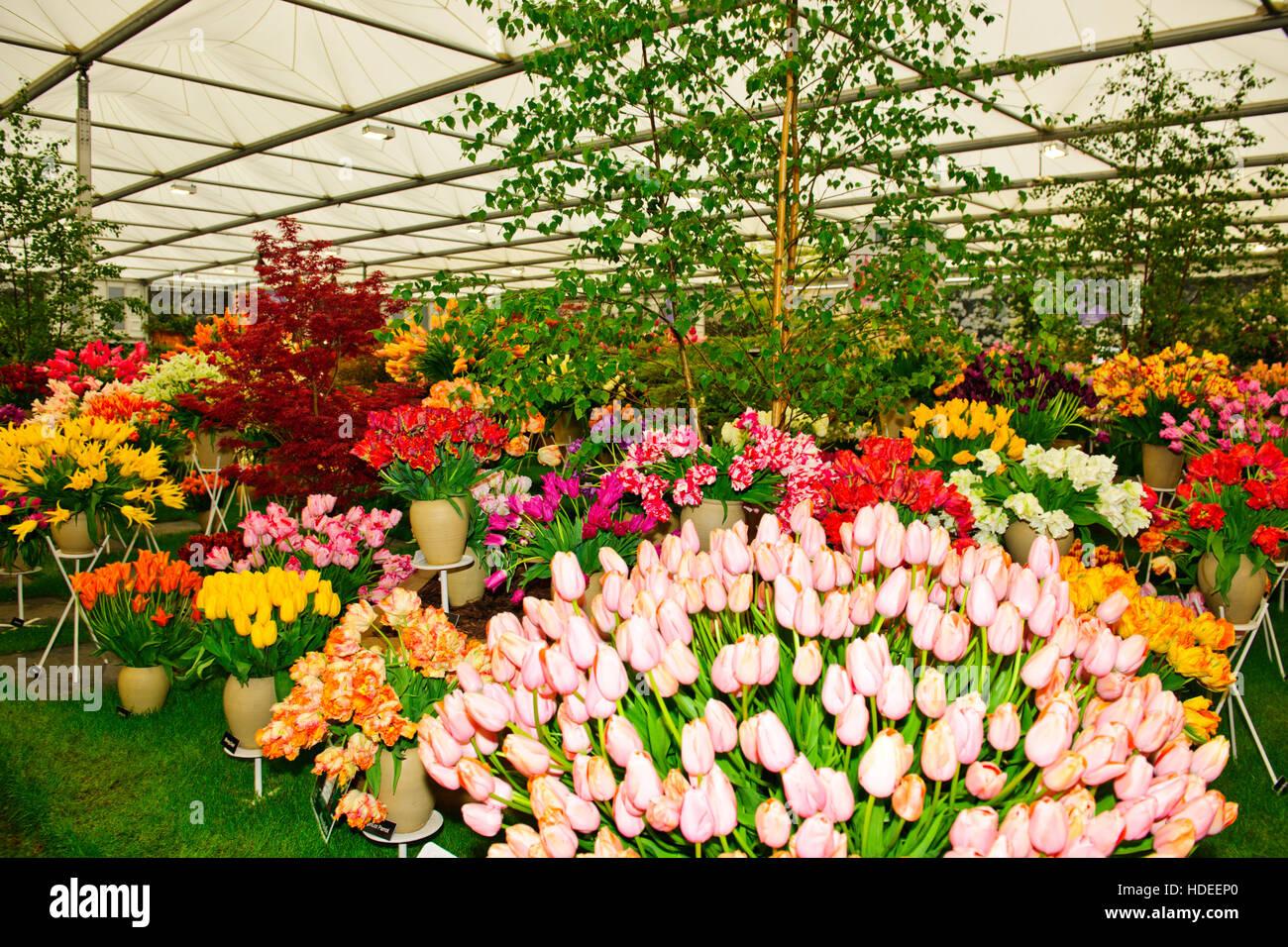 chelsea flower show 2016, bloms glühbirnen holland, blume, Garten ideen