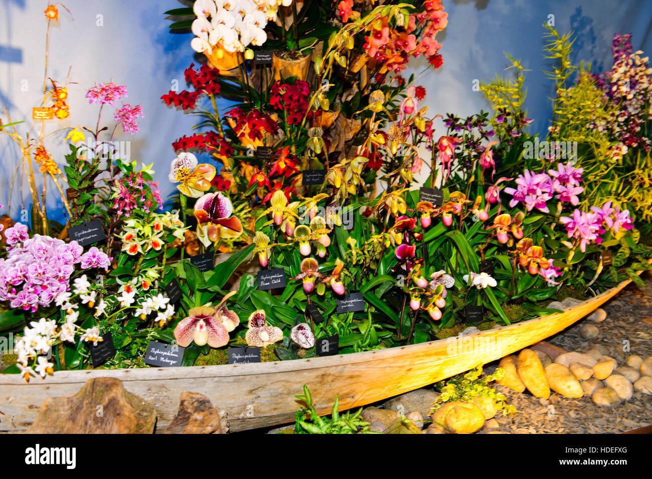 chelsea flower show 2016, vacherot & lecoufle orchideen, Garten ideen