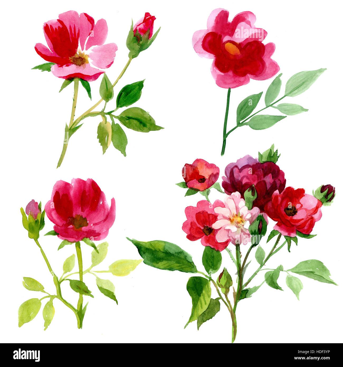 4 Arten Von Rosen In Aquarell Stockfoto Bild 128795514 Alamy