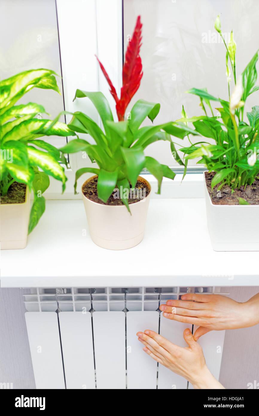 Setzen Sie auf weiße Heizkörper Heizung Arm. Fensterbank mit Blumen ...