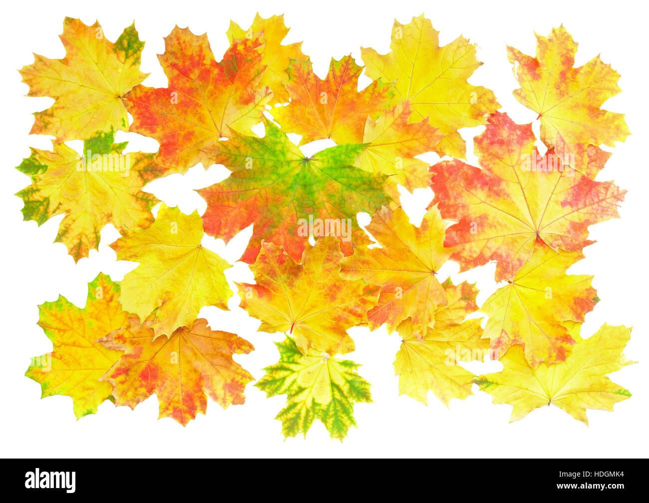 Hintergrund Hintergrundbilder Perfekte Herbst Blatt Uber Weiss