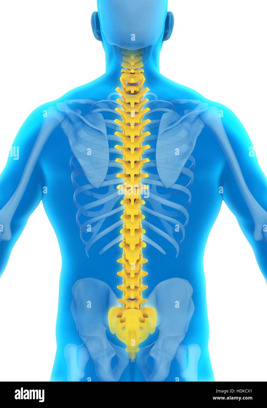Spinal Cord Injury Stockfotos & Spinal Cord Injury Bilder - Alamy