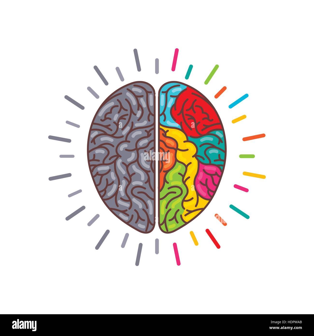 Schön Markiertes Bild Des Menschlichen Gehirns Galerie - Anatomie ...