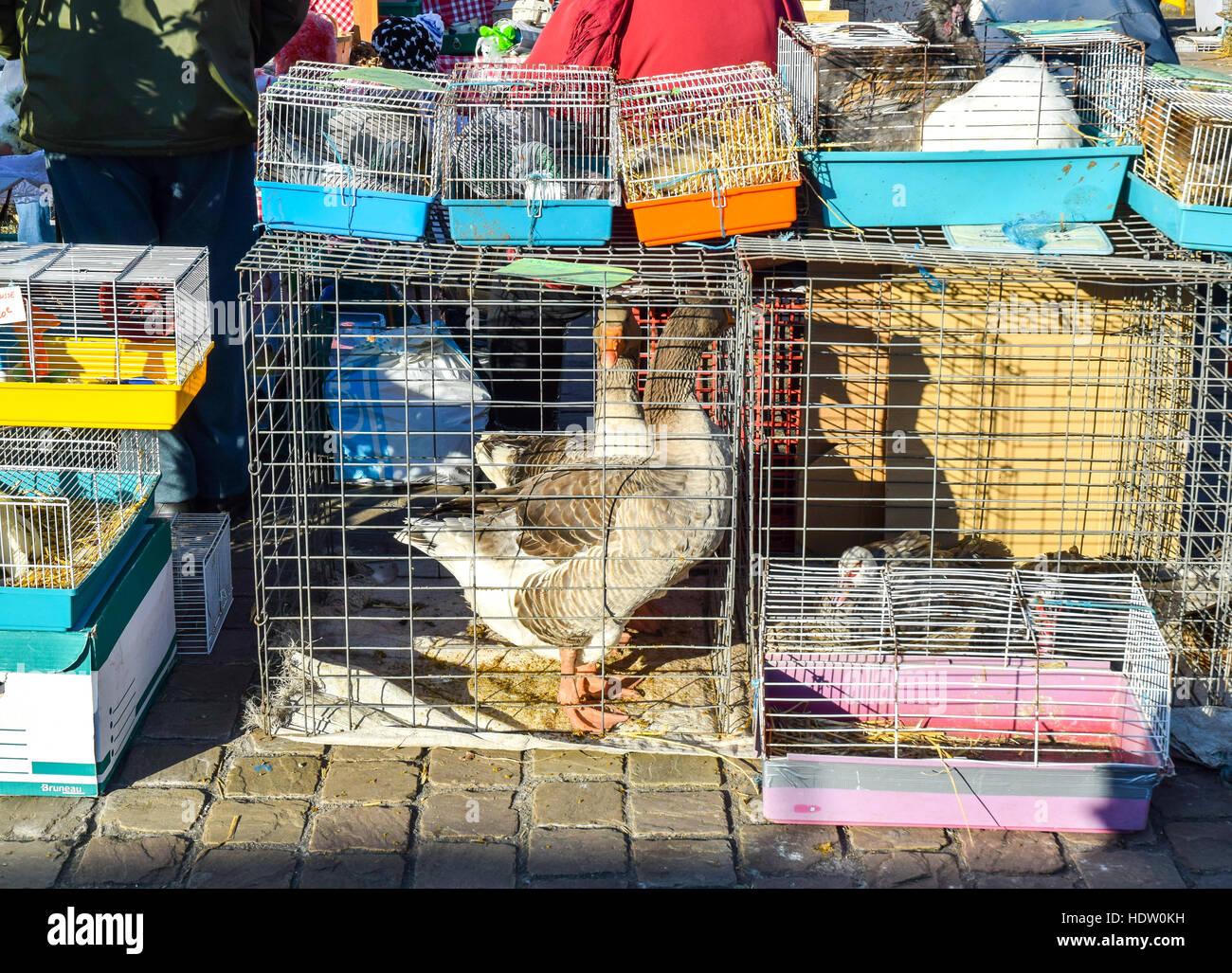 duck cage stockfotos duck cage bilder alamy. Black Bedroom Furniture Sets. Home Design Ideas