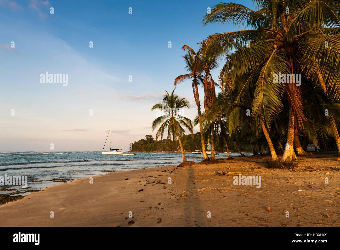 Blick auf einen Strand mit Palmen und Boote in Puerto Viejo de Talamanca, Costa Rica, Mittelamerika Stockbild
