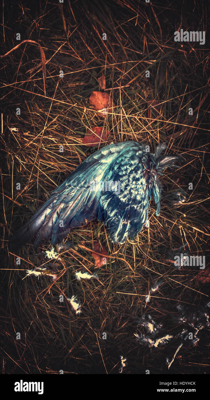 künstlerischen Bild des Vogels Flügel Stockbild