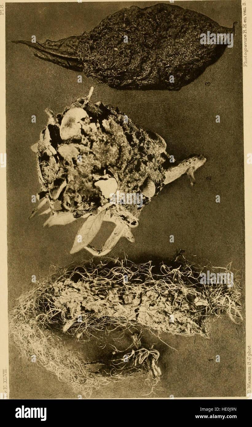 Tijdschrift Voor Entomologie (1905) Stockbild