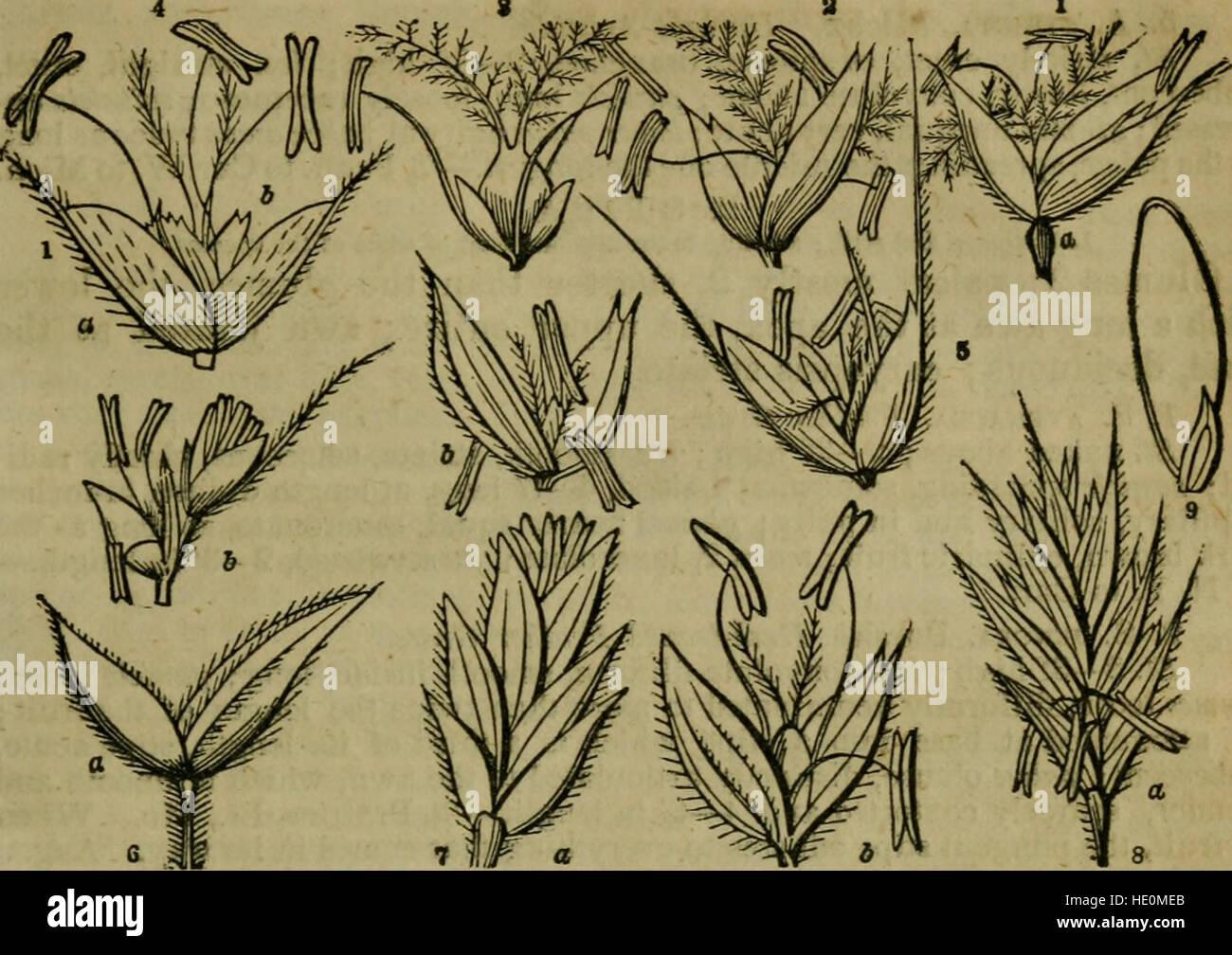 Ein Klasse-Buch der Botanik für Hochschulen, Akademien und andere Seminare konzipiert. Illustriert von einer Flora des nördlichen, mittleren und westlichen Staaten; vor allem der Vereinigten Staaten nördlich der Hauptstadt, Stockfoto