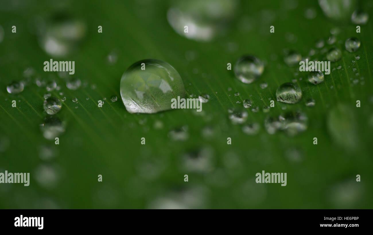 Wasser Tropfen Nahaufnahme auf Blatt Stockfoto