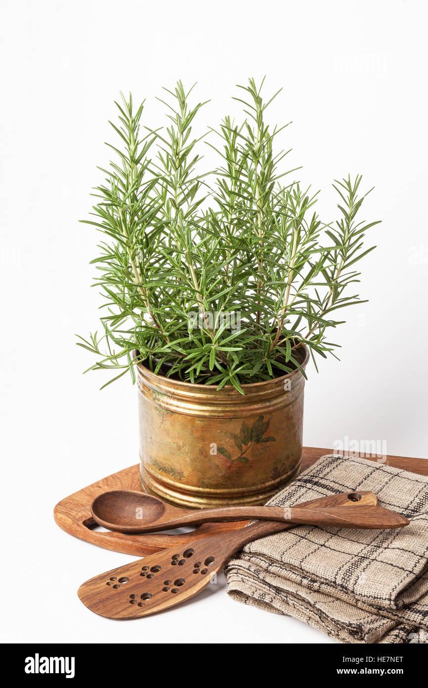 Frischer Rosmarin Pflanzen Die Wachsen In Einem Vintage Kupfer Topf