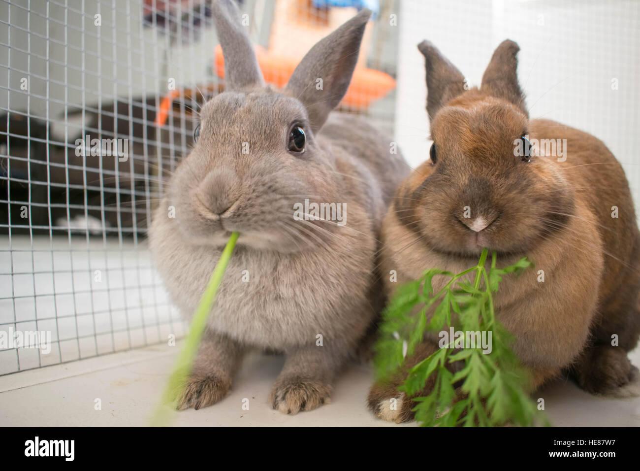 close up rabbits nose stockfotos close up rabbits nose bilder alamy. Black Bedroom Furniture Sets. Home Design Ideas