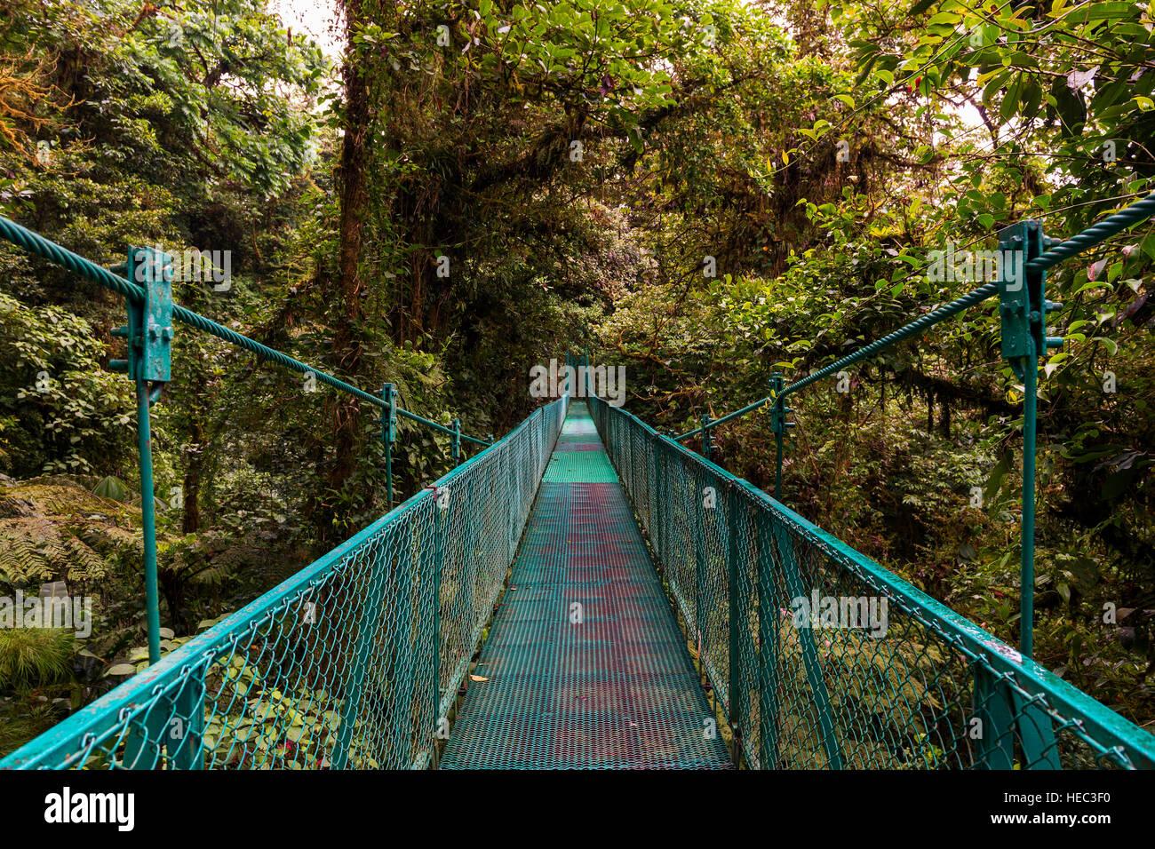 Hängebrücke über den Baumkronen der Bäume in Monteverde, Costa Rica, Mittelamerika Stockbild