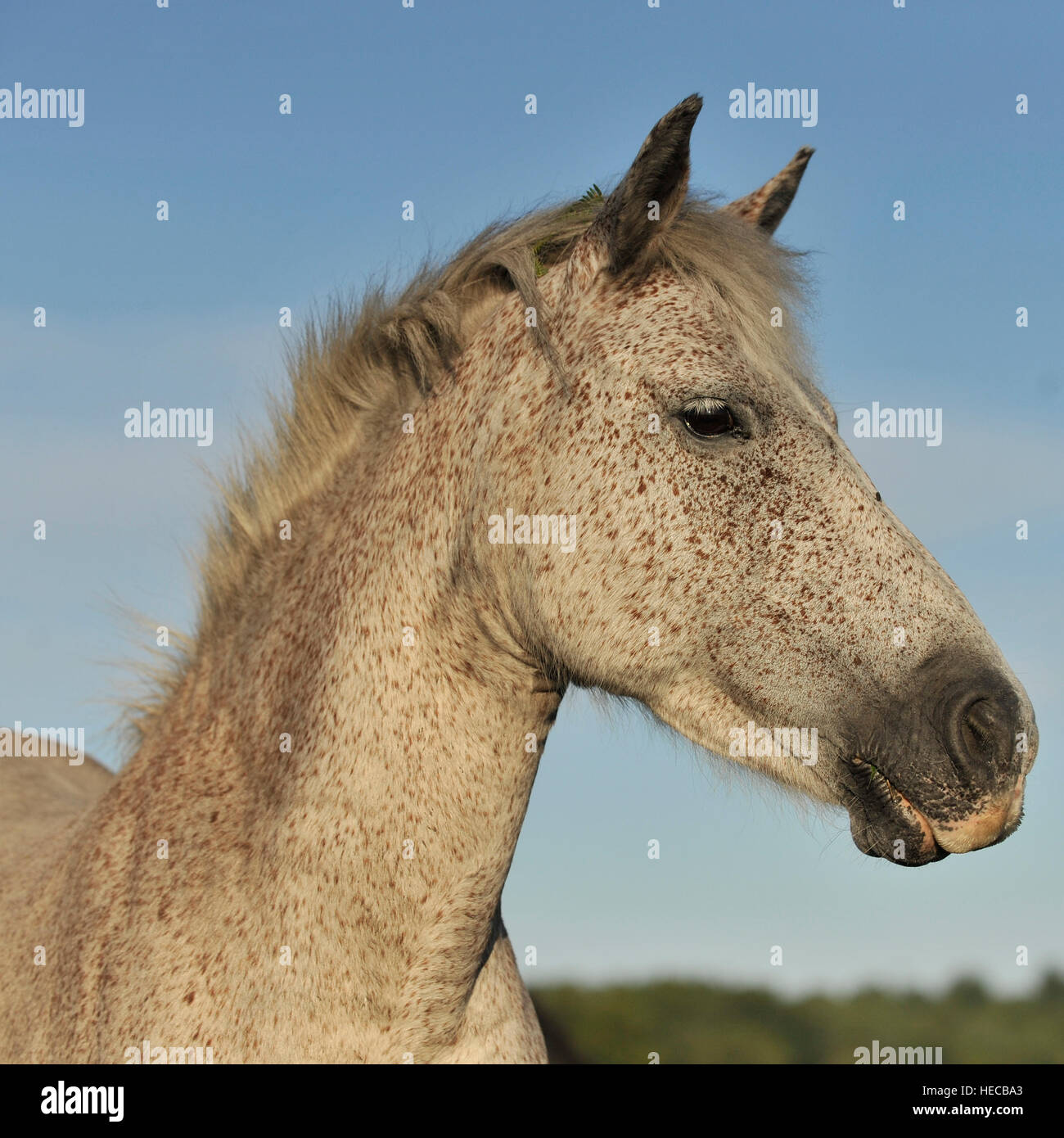 wildes New Forest pony Stockbild
