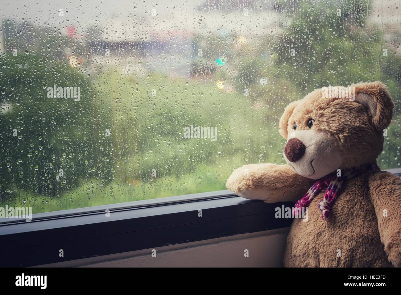 wet teddy bear stockfotos wet teddy bear bilder seite 3 alamy. Black Bedroom Furniture Sets. Home Design Ideas