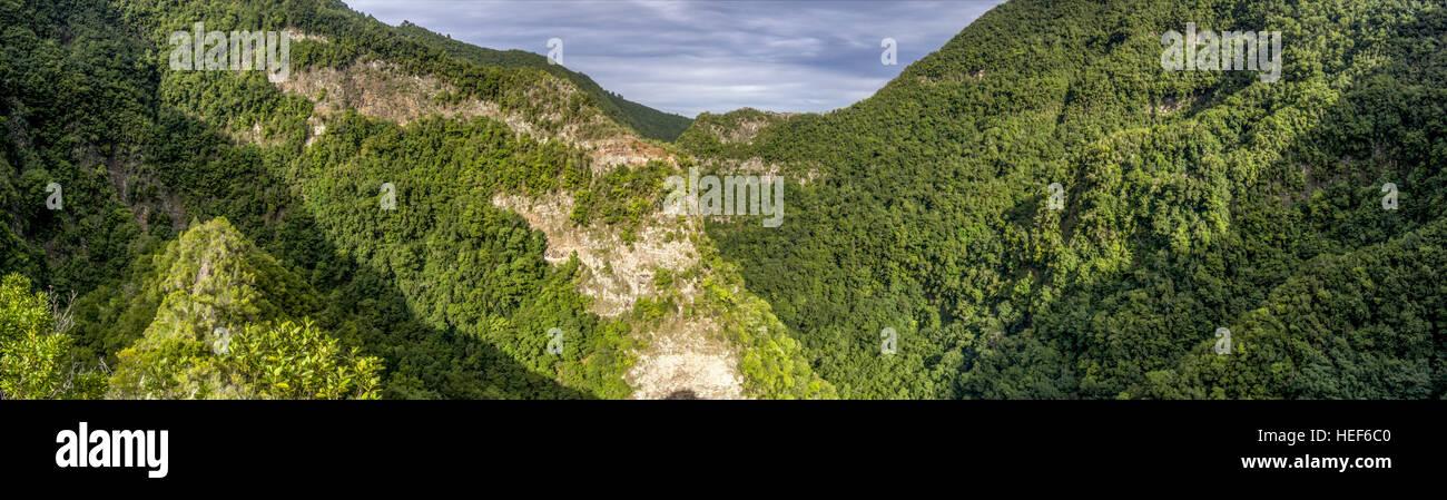 Sicht, Lorbeerwald Los Tilos-Biosphären-Reservat, La Palma, Kanarische Inseln, Spanien Stockbild