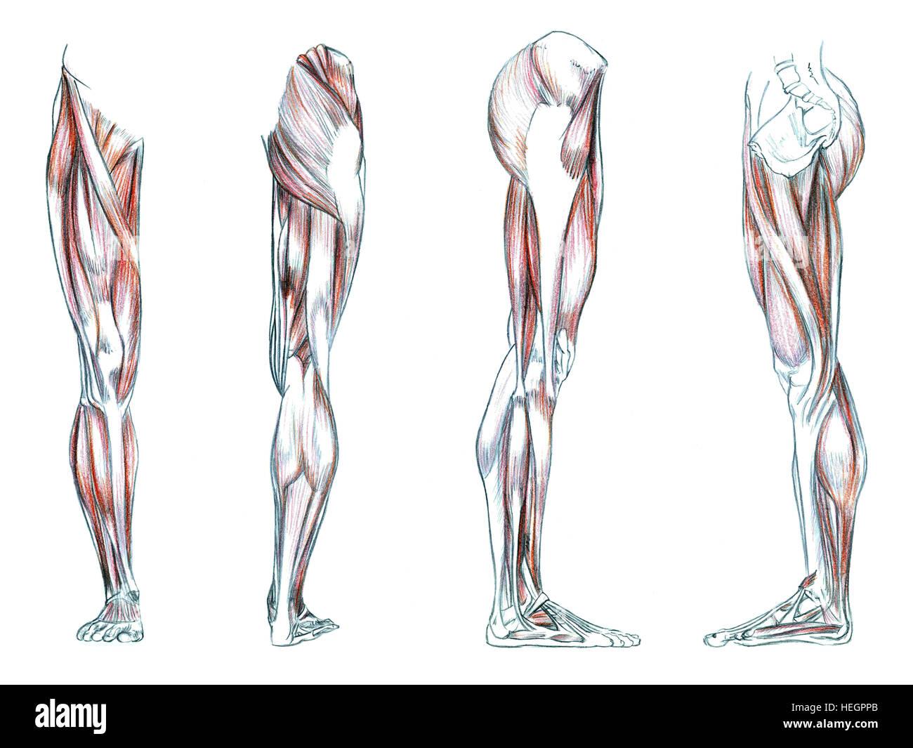 Ungewöhnlich Hirnvenenanatomie Zeitgenössisch - Menschliche Anatomie ...