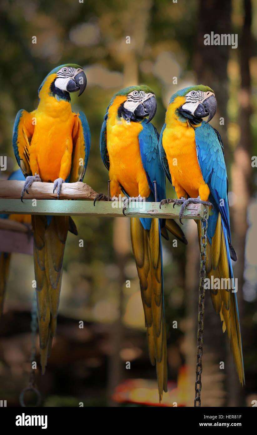 Parrots Parrots Stockfotos & Parrots Parrots Bilder - Seite 9 - Alamy