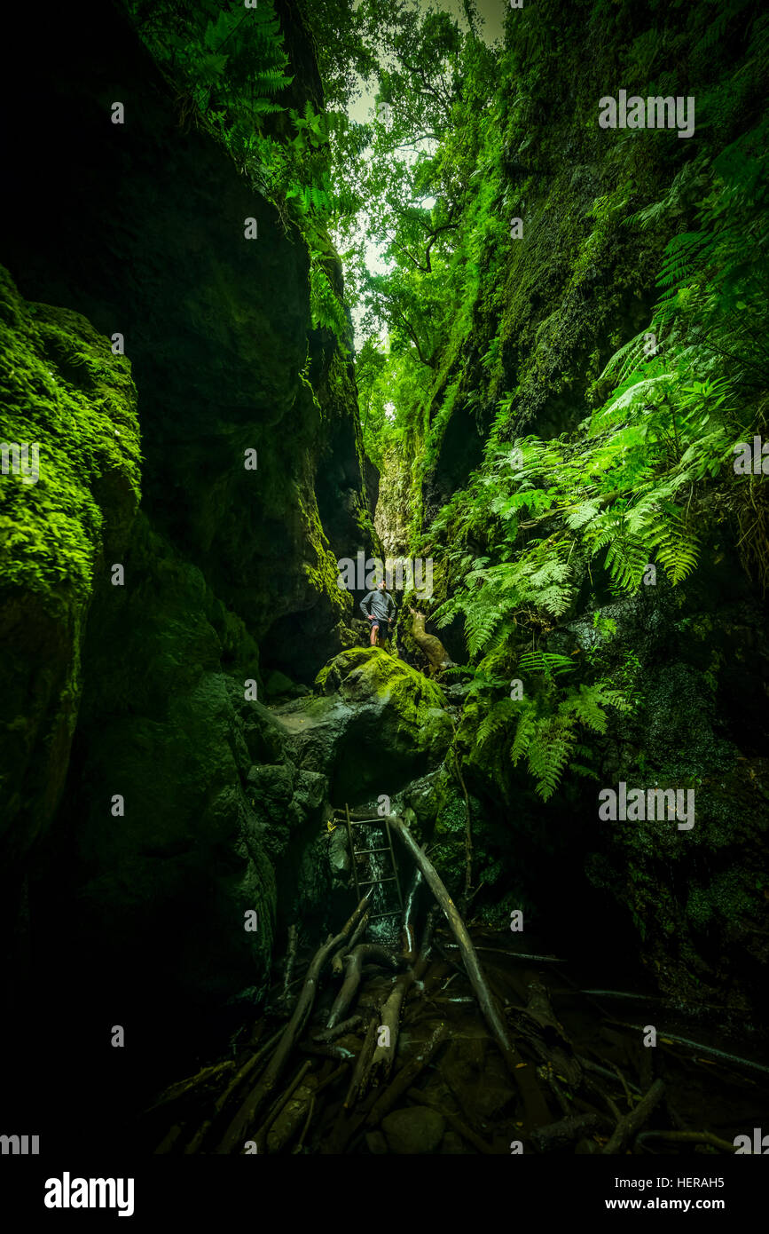Spanien, die Kanarischen Inseln, La Palma, laurel Wald, Los Tilos Stockbild