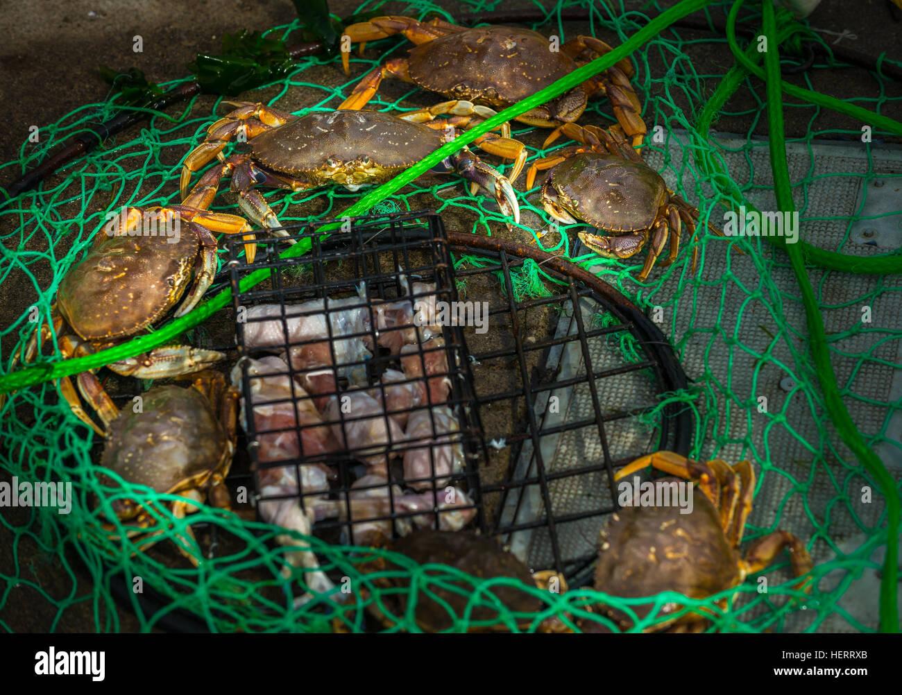 Wire Trap Stockfotos & Wire Trap Bilder - Alamy