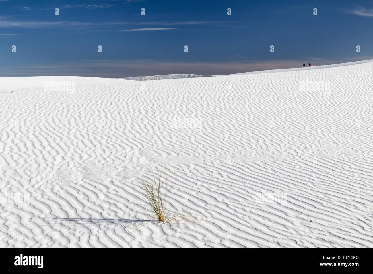 Weißen Gips Sanddüne und einsamer Rasen-Anlage im White Sands National Monument in der Nähe von Alamogordo, Stockbild