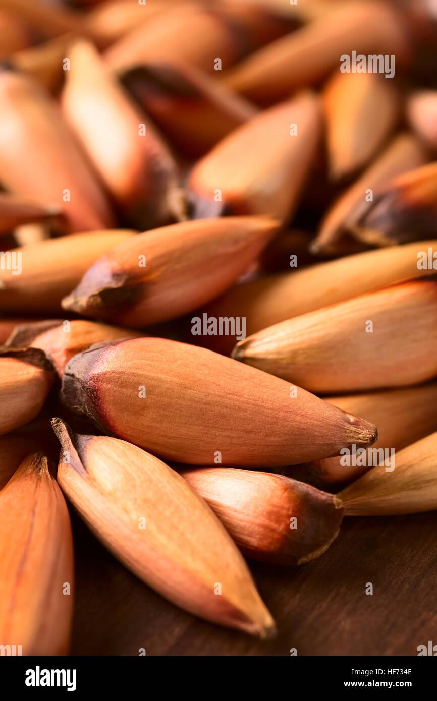 Roh Essbar Chilenischen Pinones Pinienkerne Des Chilenischen Kiefer