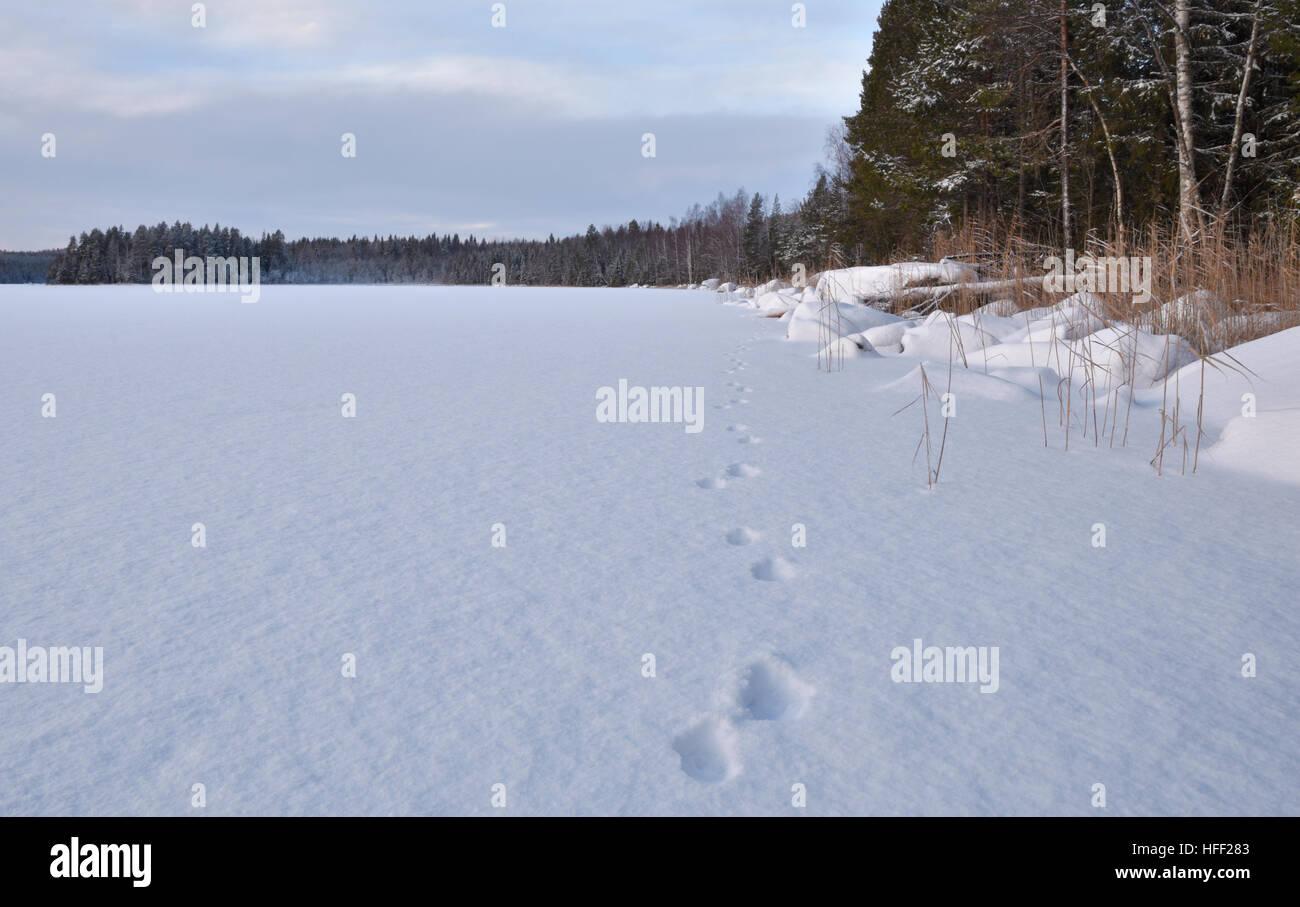 Überblick über marder im schnee auf einem see im norden von schweden