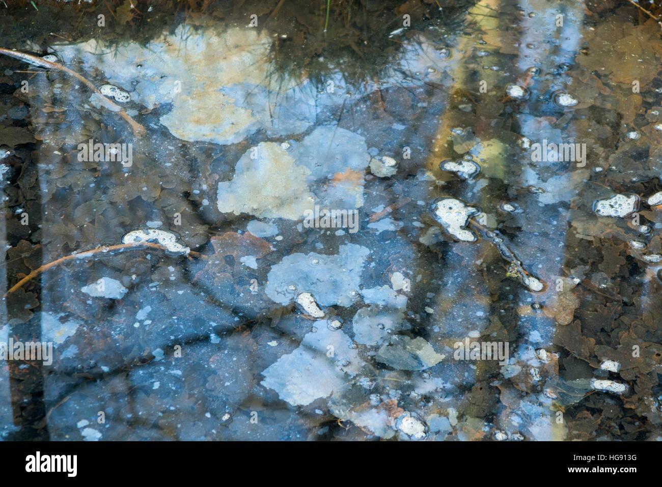 Wasser Pool / Teich / langsam fließenden Strom mit Fläche / schwimmende Öl oder Fett verschmutzt. Stockbild
