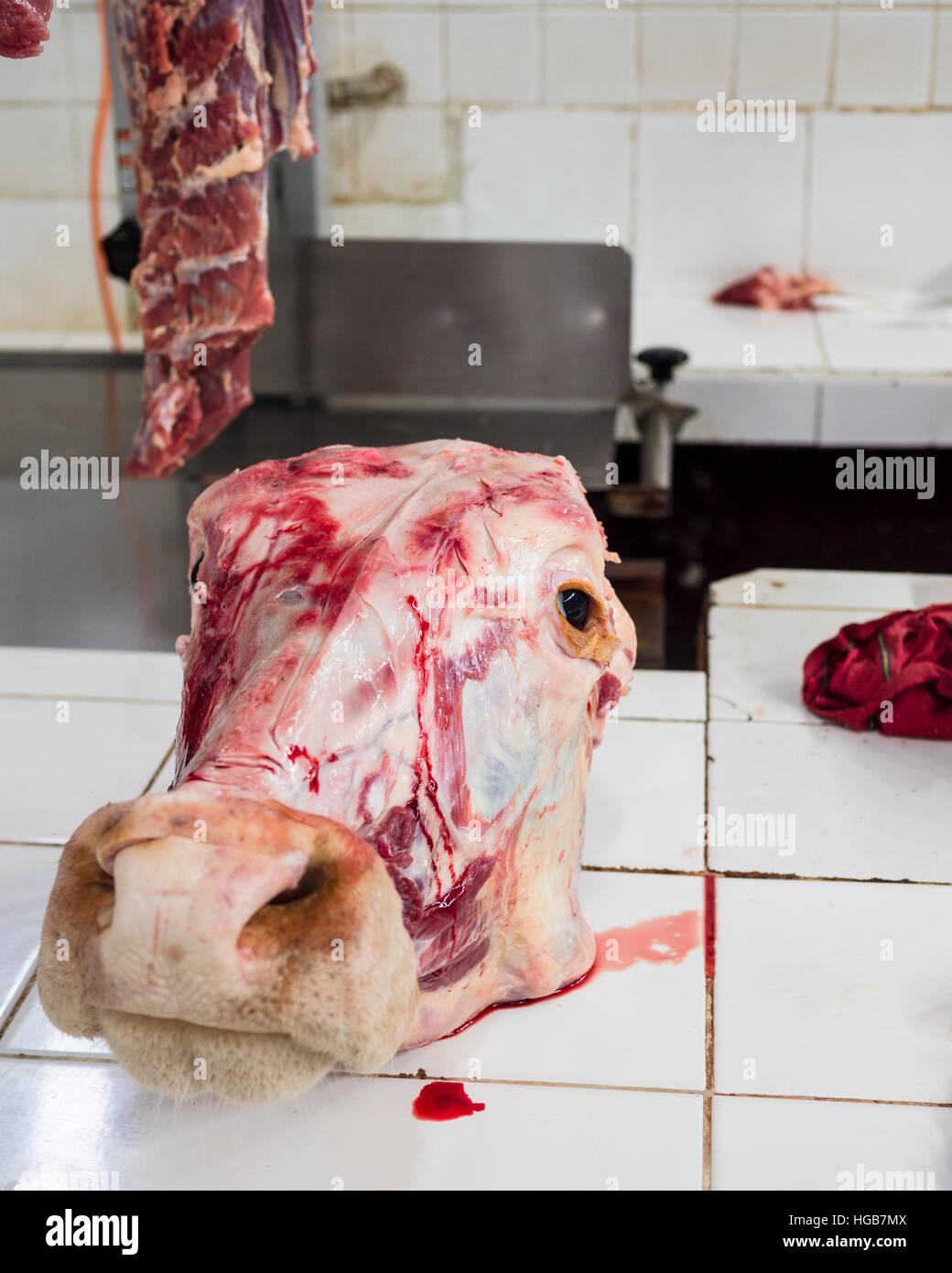 Kuh Kopf tropft Blut gehäutet. Ein abgeschlachtet durchtrennt Kuhkopf auf einem Zähler nach oben in Valladolid Stockbild