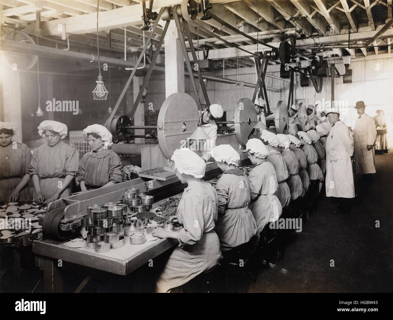Arbeiter packen gechipt Rind, 1910. Stockbild