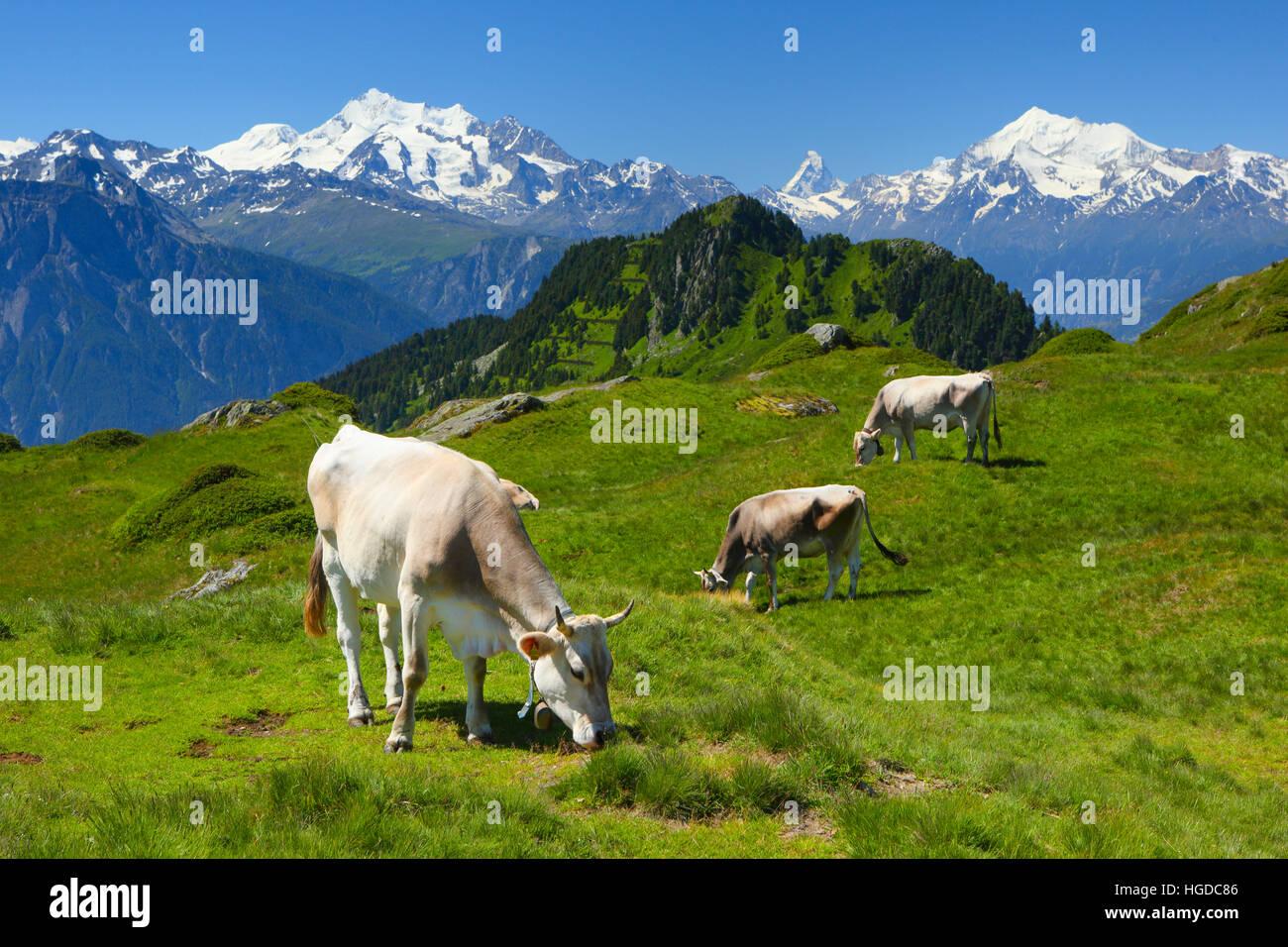 Mischabel, Matterhorn, Weisshorn, Schweizer Alpen, Wallis, Schweiz Stockbild
