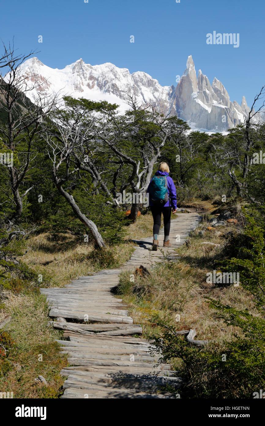 Wanderer auf trail Torre mit Blick auf den Cerro Torre, Laguna, El Chalten, Patagonien, Argentinien, Südamerika Stockbild