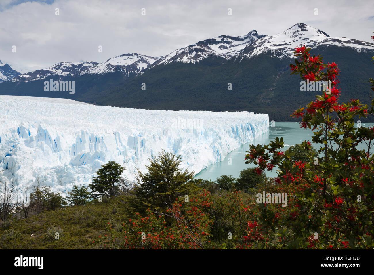 Perito Moreno-Gletscher am Lago Argentino, El Calafate, Parque Nacional Los Glaciares, Patagonien, Argentinien, Südamerika Stockfoto