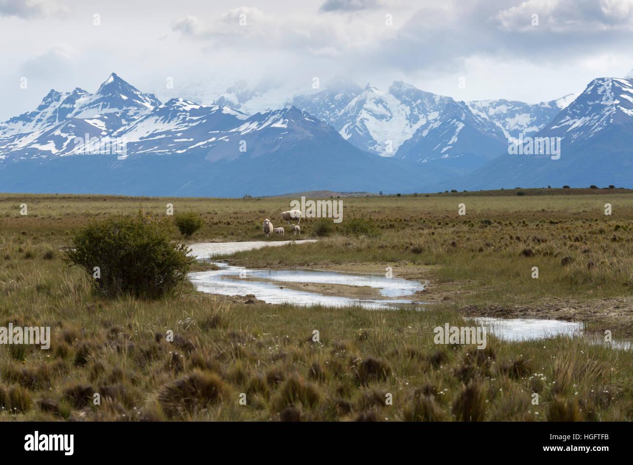 Fluss und Schafe unter der Gebirgskette der Anden, Estancia Alta Vista, El Calafate, die Anden, Patagonien, Argentinien, Stockbild