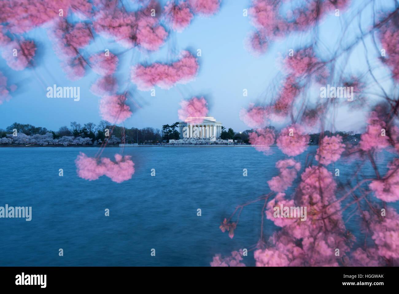 Thomas Jefferson Memorial ist eingerahmt von Kirschblüten bei Sonnenuntergang. Stockbild