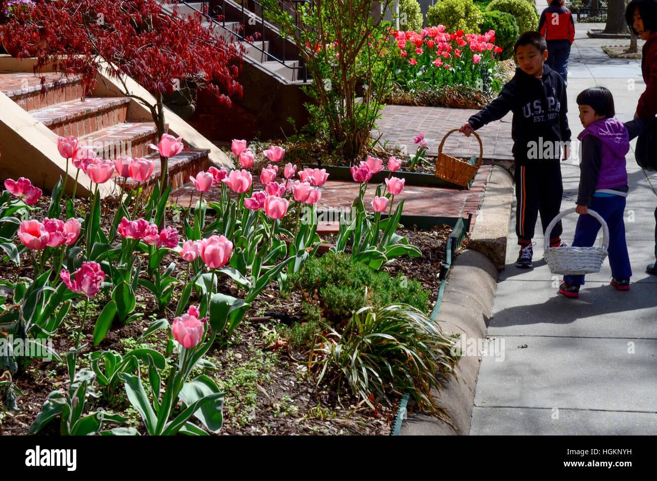 Kinder ansammelnder entlang ihre Osterkörbchen anhalten um die hübschen rosa Tulpen blühen zu schätzen Stockbild
