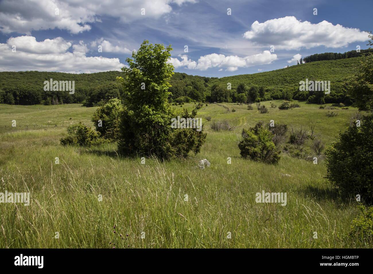 Relikt montane Wiesen von Nagy Mezoi, Bukke Nationalpark, Ungarn Stockbild