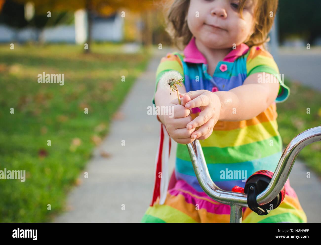 Ein junges Mädchen hält einen Löwenzahn sitzend auf einem Dreirad. Stockbild