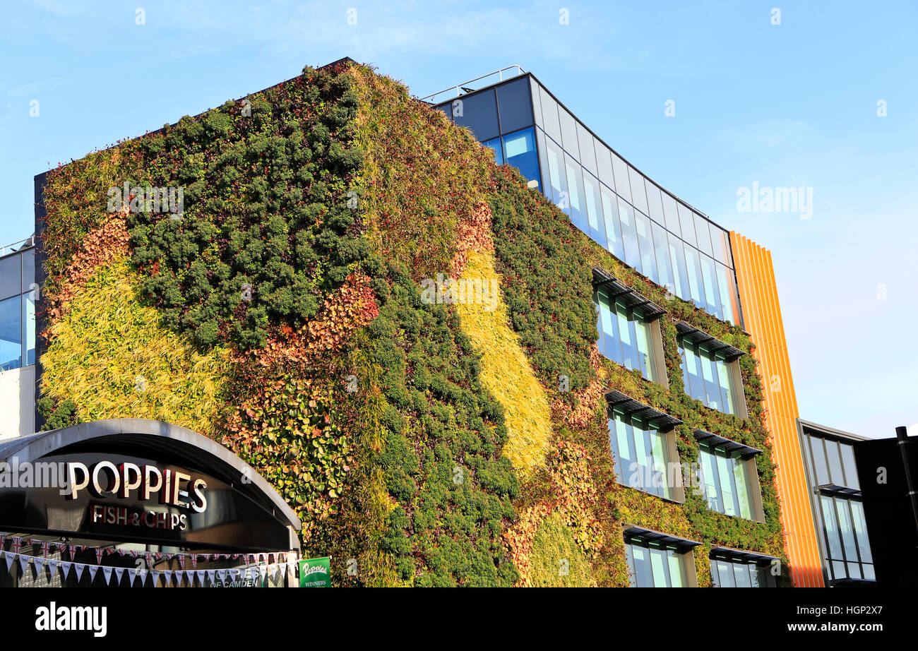 Plants Living Wall ,office Stockfotos & Plants Living Wall ,office ...