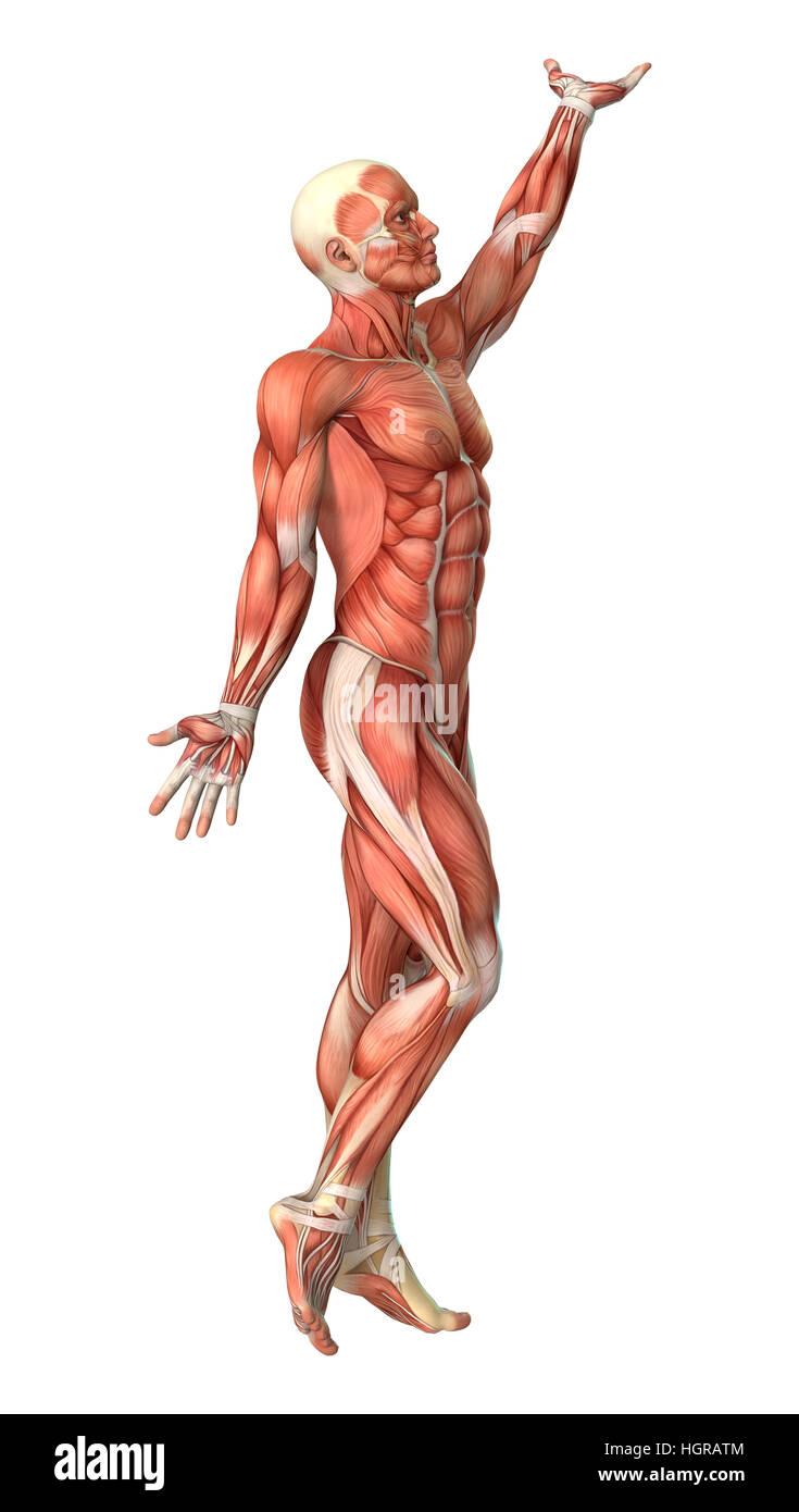 Beste 3d Modell Der Menschlichen Anatomie Bilder - Anatomie Ideen ...