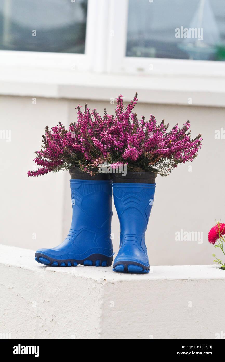 Mit Gummistiefel Farbenfrohe Gefüllt Schmücken Häuser Blumen I76yvfgYb