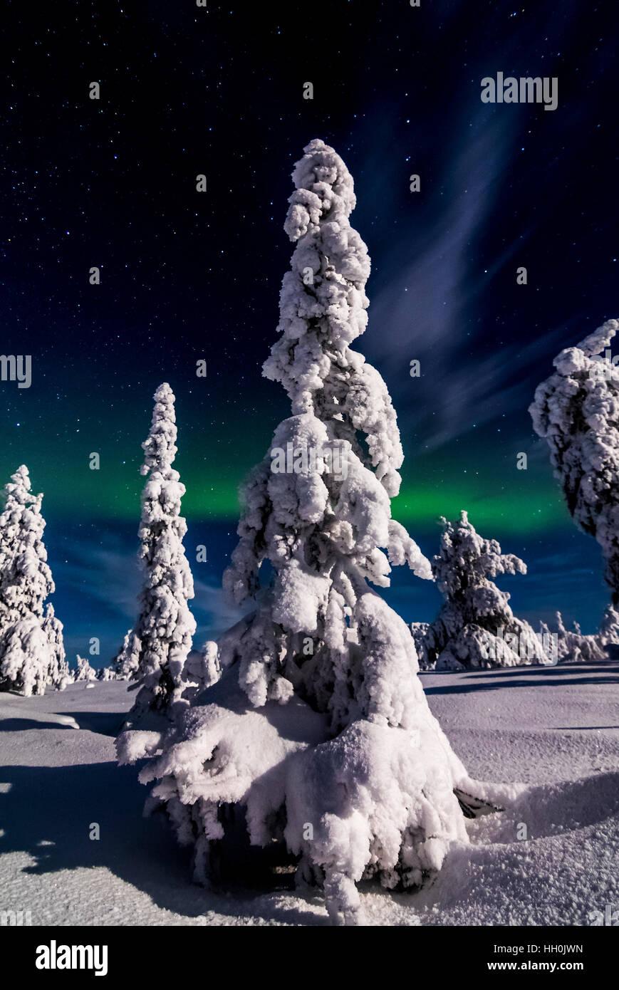 Nordlichter im Nationalpark Riisitunturi, Finnland Stockbild