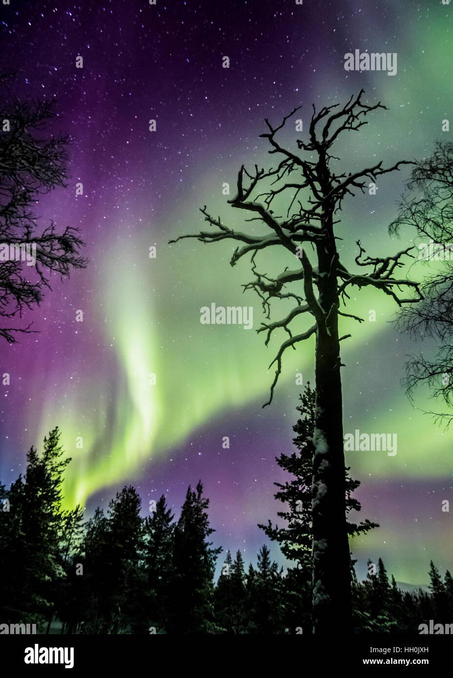 Nordlichter im Nationalpark Urho Kekkonen, Finnland Stockbild