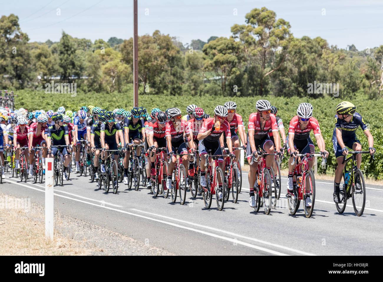 Adelaide, Australien. 17. Januar 2017. Radfahrer von der Trek - Segafredo-Team (TFS) während der 1. Etappe der Santos Stockfoto