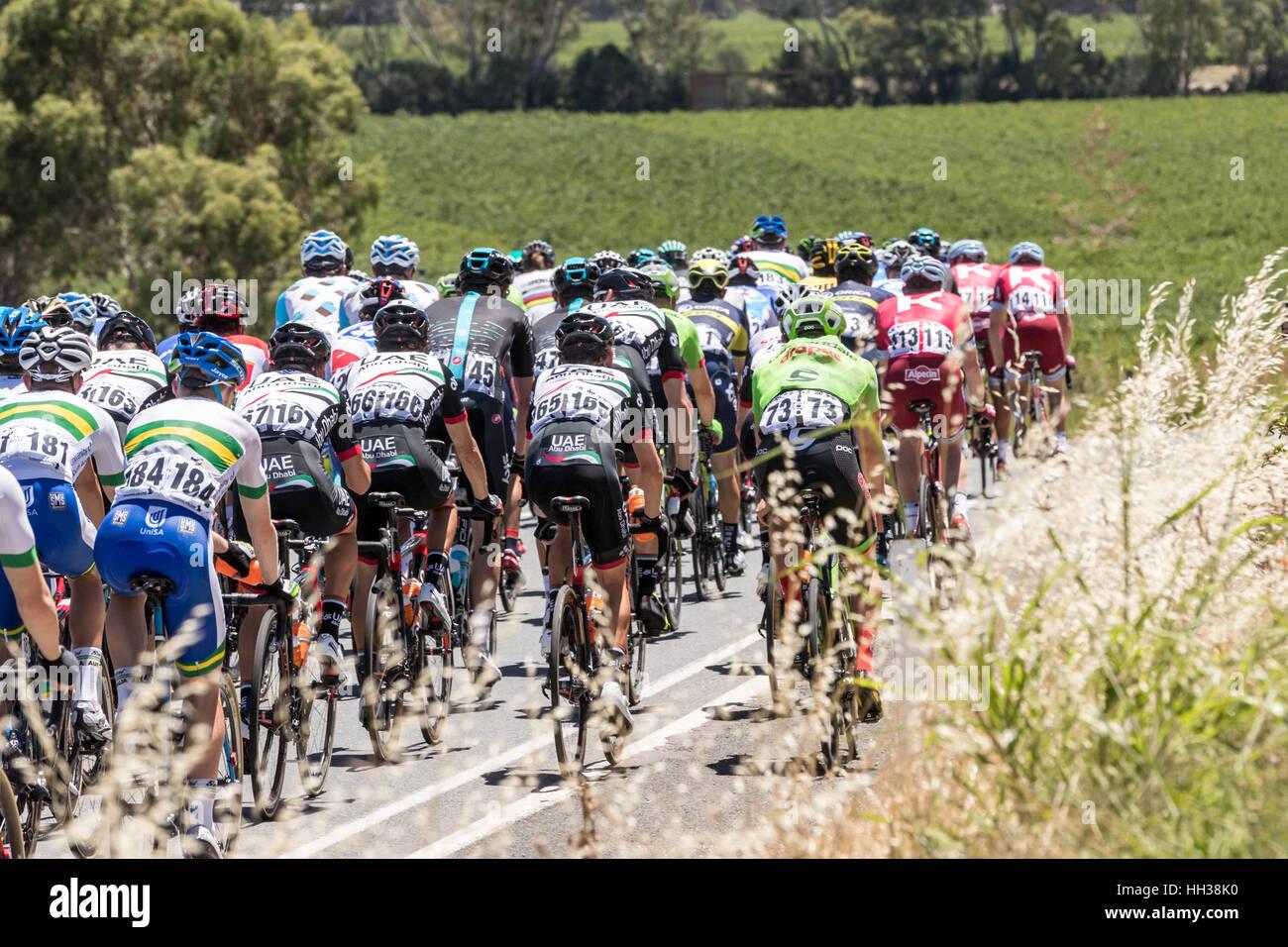 Adelaide, Australien. 17. Januar 2017. Radfahrer in Phase 1 der Santos Tour Down unter 2017. Bildnachweis: Ryan Stockfoto