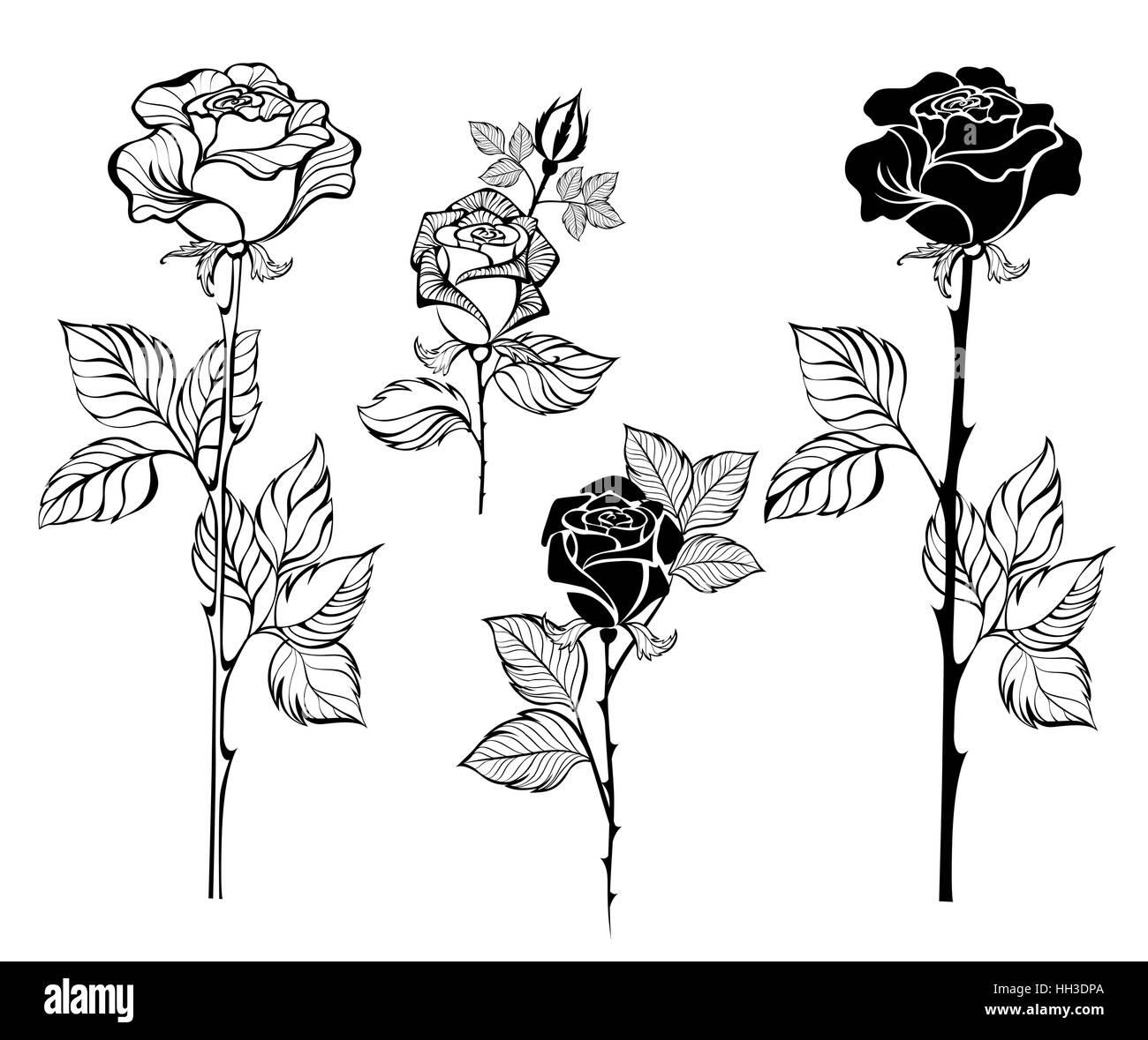 reihe von gemalte kunst kontur rosen auf wei em. Black Bedroom Furniture Sets. Home Design Ideas