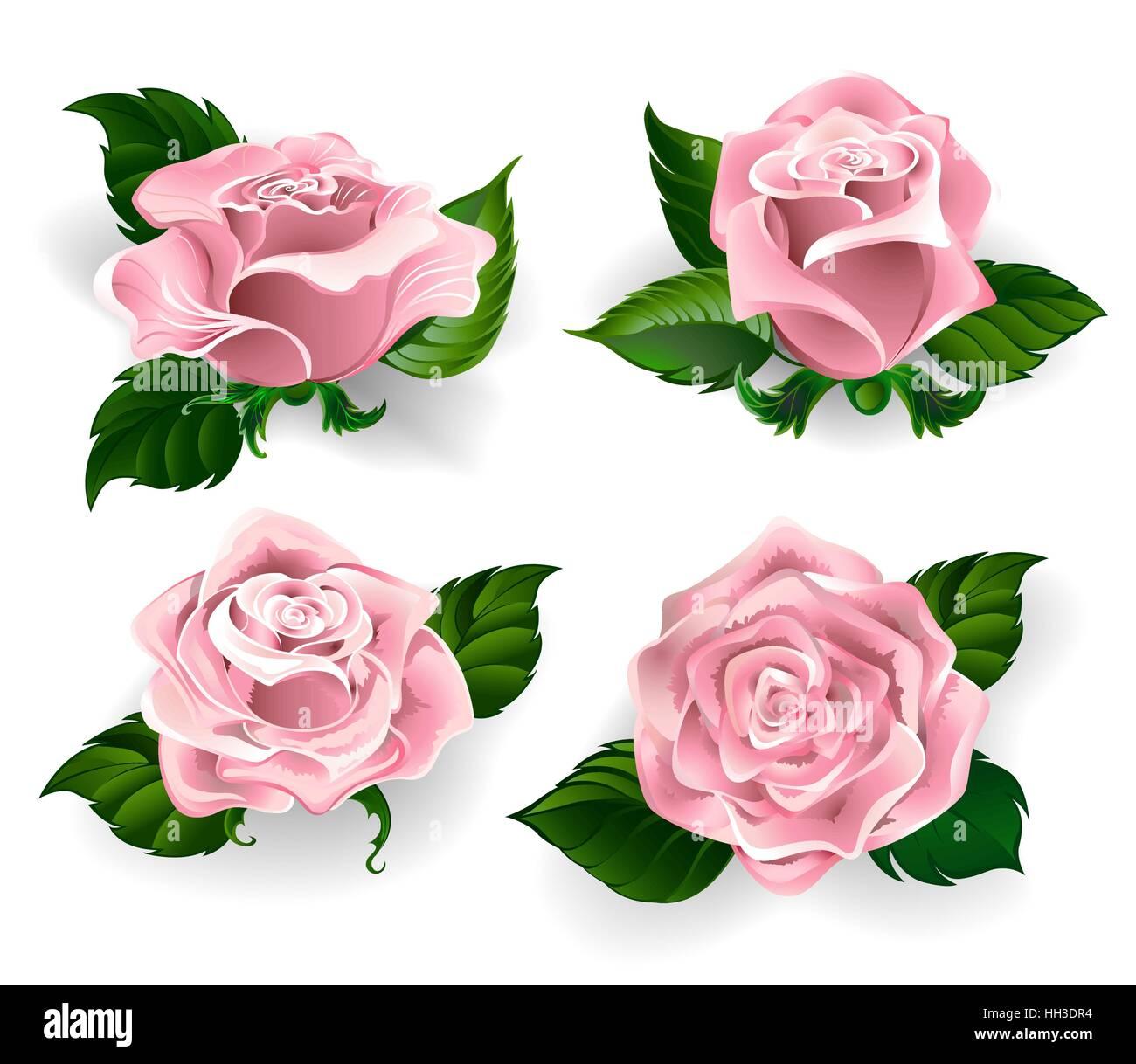 satz von gemalten rosen rosenquarz farbe mit gr nen bl ttern auf einem wei en hintergrund vektor. Black Bedroom Furniture Sets. Home Design Ideas