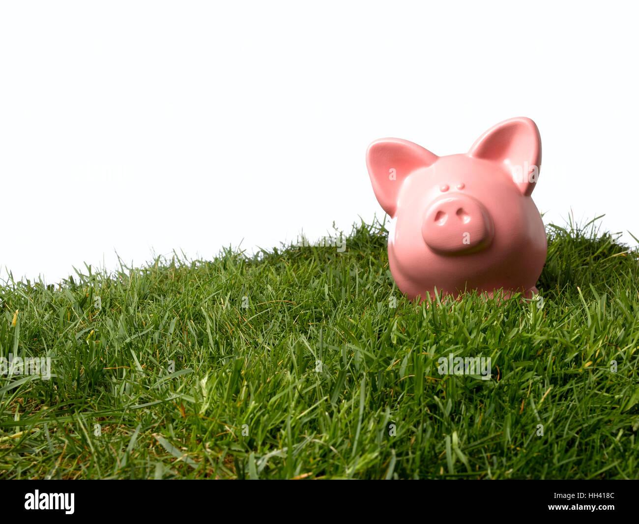 Sparschwein auf Hügel Stockbild